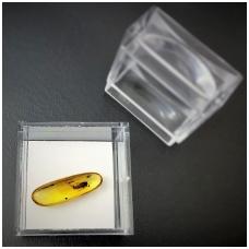 Gintaro gabaliukas su inkliuzu dėžutėje
